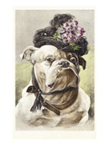 Hand-Colored Postcard of a Bulldog Dressed in a Bonnet Giclee Print