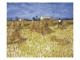 Corn Harvest in Provence Giclee Print by Vincent van Gogh