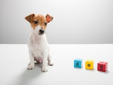 Jack russell puppy and building blocks spelling dog Photographic Print