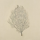 Sea Fan Photographic Print by John Kuss