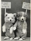 We Want More Bones, We Want More Meat Photographic Print