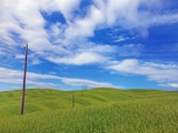 Telephone poles over grassy hills near Pienza Photographic Print by Frank Krahmer