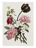 A Bouquet of Tulip and Peonies Giclee Print by Jean Louis Prevost