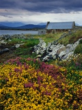 Flowers Along Carna Bay Photographic Print by Richard Cummins