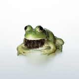 Frog Wearing Beard Photographic Print by Christopher C Collins