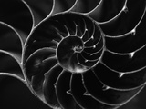 Cross Section of Sea Shell Reprodukcja zdjęcia autor Henry Horenstein