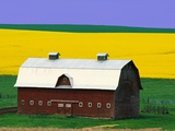 Rape Field and Barn Photographic Print by David R. Frazier