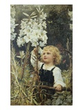 Lilies Giclee Print by Frederick Morgan