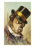 Postcard of a Bulldog Coachman Asleep Giclee Print