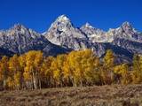 Forest near Grand Teton Photographic Print by Leo Fiedler