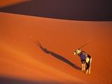 Oryx Antelope on Sossusvlei Sand Dune Fotografisk tryk af Theo Allofs