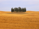 Cluster of Cypress Trees Photographic Print by Sergio Pitamitz