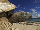 Giant Tortoise on the Beach Photographic Print by Martin Harvey