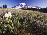 Flowers and Mt. Rainier Photographic Print by Craig Tuttle