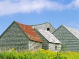 Row of Old Shingle Barns in Field Photographic Print by William Manning