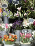 Flowers for Sale Fotografie-Druck von Susan C. Rosenthal