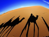 Shadows of Camels Photographic Print by Martin Harvey