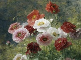 Poppies Photographic Print by Louis Marie Lemaire
