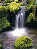 Mossy Rocks and Creek Waterfall Photographic Print by Craig Tuttle