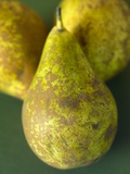 Conference Pears Photographic Print by Mark Bolton