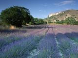 Fields of Lavender in Provence, France Photographic Print by Michael Busselle