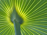 Palm Frond Photographic Print by Gary W. Carter
