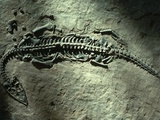 Ancient Fossil in Stone Photographic Print by Nathan Benn