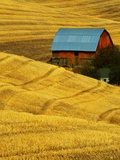Barn and Golden Wheat Field Photographic Print by Robert Crum