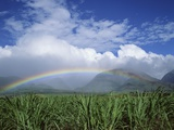Rainbow Above Sugar Cane Field on Maui Photographic Print by James Randklev