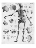 Anatomy:The Human Skeleton Frame Giclee Print by  Bettmann