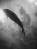 Silhouette of a Fish Photographic Print by Henry Horenstein