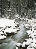 Craig Tuttle - Creek Winding Way Through Forest Fotografická reprodukce
