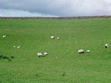 Sheep on Hillside in Ireland Photographic Print by Joey Nigh
