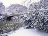 Snow at Bow Bridge in Central Park Photographic Print by Alan Schein