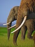 African Elephants Photographic Print by Martin Harvey