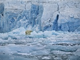 Polar Bear on Ice at Monaco Glacier Photographic Print by Hans Strand