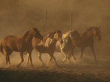 Herd of Horses Photographic Print by Renee Lynn