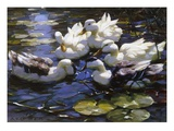 Ducks on the River Reproduction procédé giclée par Alexander Max Koester