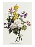 Bouquet of Mixed Flowers Giclee Print by Jean Louis Prevost