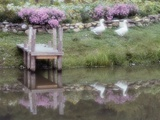 Duck Pond Photographic Print by Susan C. Rosenthal