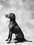 Sitting Dog Photographic Print by Lawrence Manning