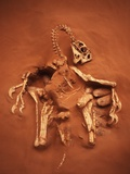 Fossil of Oviraptor and Eggs Photographic Print by Louie Psihoyos