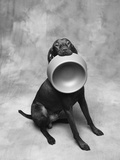 Dog Carrying Food Bowl Photographic Print by Lawrence Manning