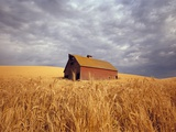 Old Barn Amidst Wheat Field Photographic Print by Craig Tuttle