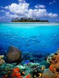 Underwater Scene in the Tropics Photographic Print by Gray Hardel