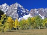Aspen Trees Before Maroon Peaks Photographie par William Manning