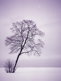 Lone Tree in Snow Photographic Print by Jim Zuckerman