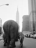 Circus Animals on 33rd Street Fotografie-Druck von  Bettmann