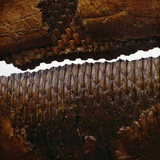 Duckbill Dinosaur Teeth in Jaw Photographic Print by Louie Psihoyos