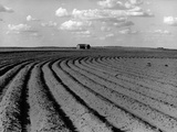 Plowed Fields on a Mechanized Cotton Farm Photographic Print